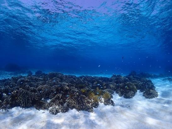 与論島 ダイビングポイント B&G前 太陽の光がキラキラ
