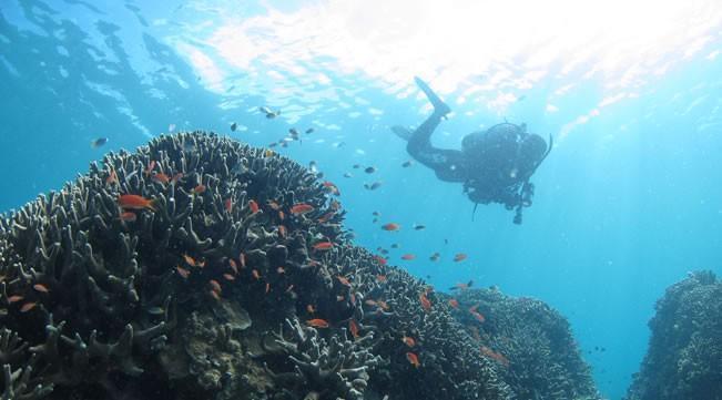 夏に負けない!沖縄ダイビング冬の魅力