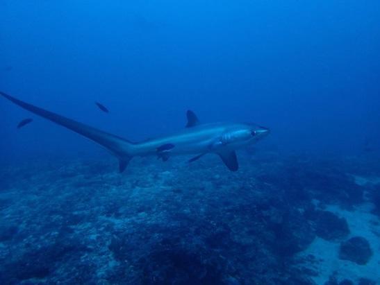 モナドショール(ニタリポイント)+マラパスクア周辺ダイビング