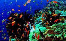 カビラオ島