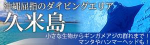 ハンマーやマンタを狙え!!冬の久米島ダイビング★